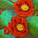 Stylized Flowers - Cactus Flowers 20x16 1200