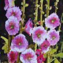 Watercolors - Hollyhocks 10x8  $750