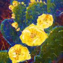 Stylized Flowers - Sleeping Cactus 20x16 1200