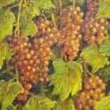 Still Life - red grapes 20x16  $2500